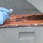 Die Spritze in die Wabengasse einführen